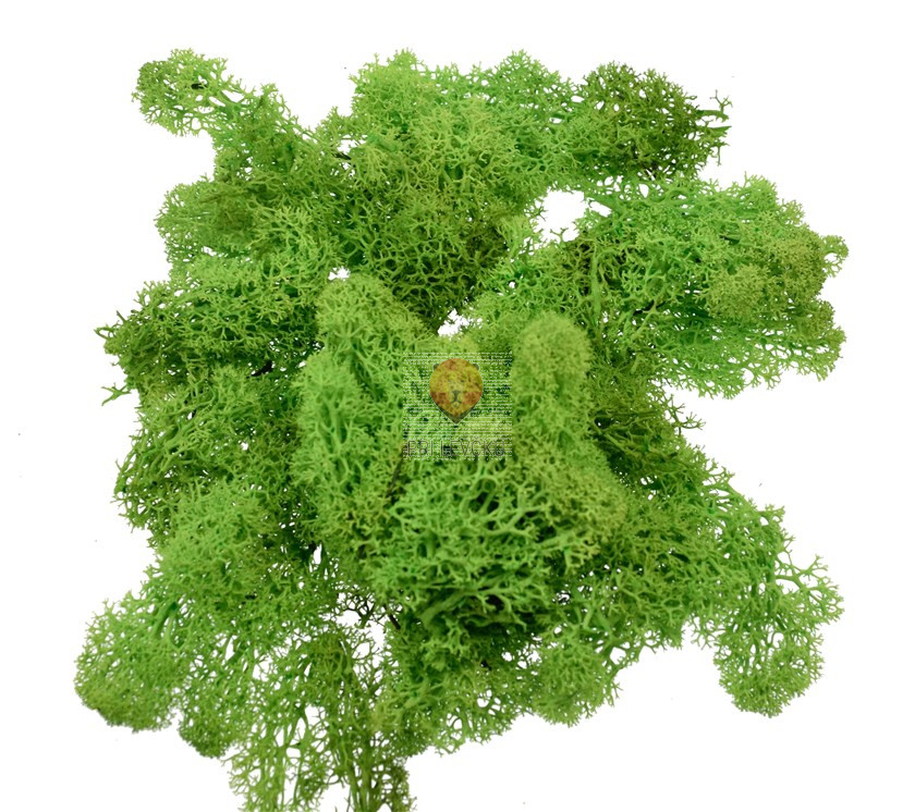 Islandski mah, svetlo zelen, 50 g