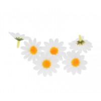 Marjetice bele 4cm 6 kosov