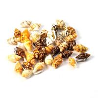 Perle školjke - polžki 8g